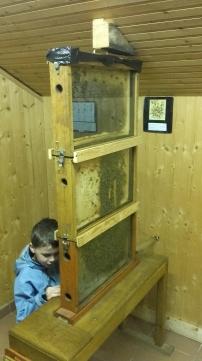 ruche vitrée (2)